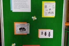 pszczola-12