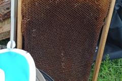 pszczola-3