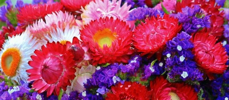 flowers-870031_1280-1170x350